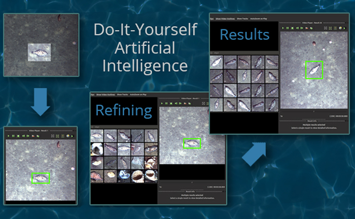 Do-it-yourself artificial intelligence. 4 screenshots of a video with a fish on it with computer program identifying the fish
